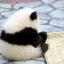 singing_panda